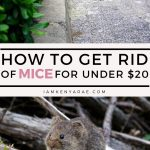 how to get rid of mice for under $20